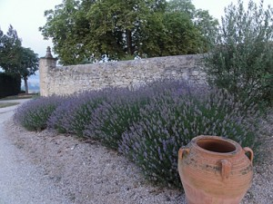 lavender-wall_small