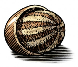 illustration of Shea Nut